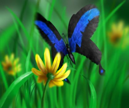 What if Nightwing was a butterfly? by UnicornJana