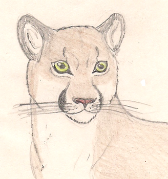 Cougar by Gris93