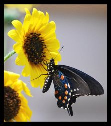 Butterfly 1 by cb1