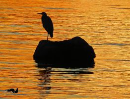 Heron Against Autumn Colours by wolfwings1