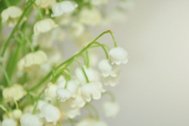 Lily of the valley by sing-cuckoo