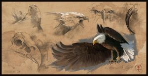 Bald Eagle Study Sheet by stevegoad