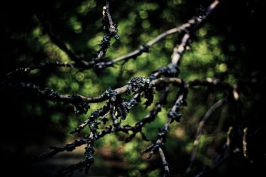 branch by vennecto