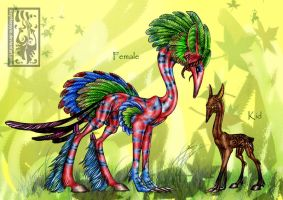 Info Feather Taerpan species by Acayth