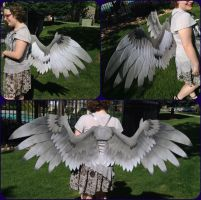 Custom Paint - Grey Griffin Wings by ThePinkPoudo