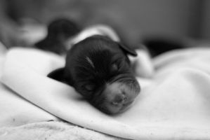Puppy - 1 day old by BenBrotherton