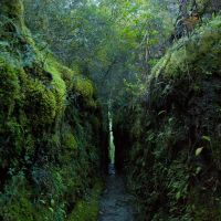 Green Gap by mark-flammable