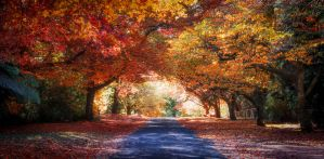 The Autumn Road by hammo