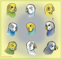 Budgie Expressions by Kosmotiel