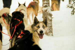 Ice Hotel Dog 2 by summer