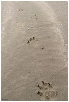 Foot Prints by jewelslove