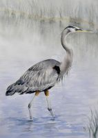 Great Blue Heron by IvieMoon