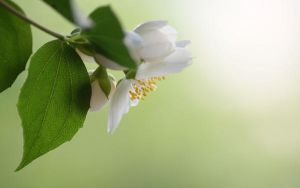 .The blossom. by CozyComfyCouch
