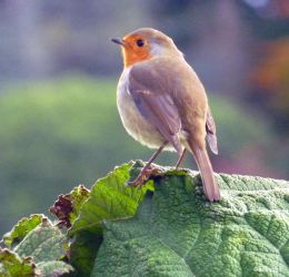Sweetly singing in Sheffield Park by ancoben