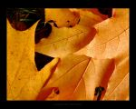Autumn Leaves II - Reissue by maverick3x6