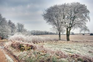 High Moor by pjones747