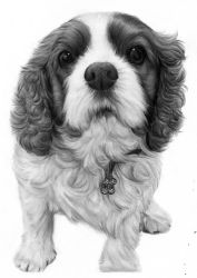 king charles spaniel commission by laurenjade15