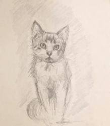 Kitten Sketch by Jenniej92