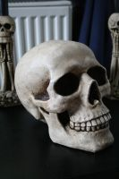 Skull 2 by TwiggXstock