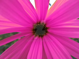 Pink Flower Photography Print
