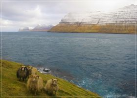 Sea, sheep, steep rock by zorm