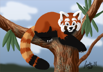 Red Panda by sailorharmony2000