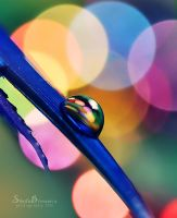 Colors Everywhere by SheilaMBrinson