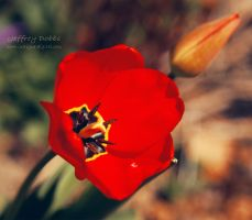 The Colour of Spring by JeffreyDobbs