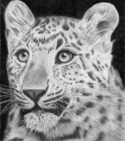 Chinese Panther by Larc-Romeo