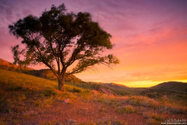 Sunrise At One Tree Hill by kkart