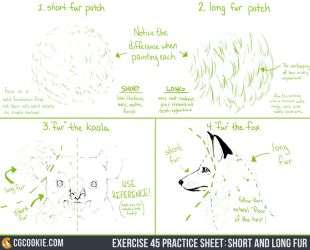 Exercise 45 Practice Sheet - Short and Long Fur by CGCookie