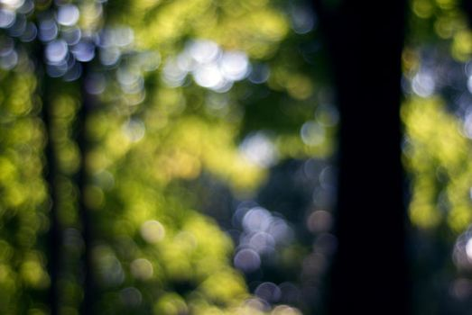 forest bokeh by lostpuppy-STOCK