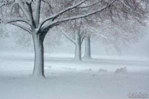 A Winter Atmosphere by kkart