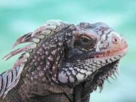 Iguana profile by Dawn2Nightfall