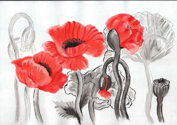 Poppies by saysly