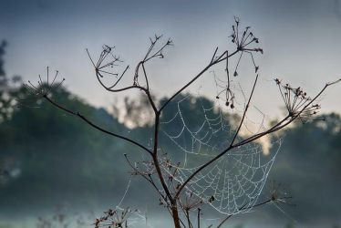 All that remains by beauty-and-nature