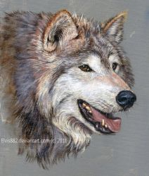Wolf by CallieFink