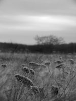 Field 2 by PeachPlumsPhotos