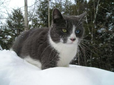 Kitty in snow. by Banethelost