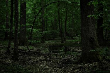 Green Forest by LillianEvill
