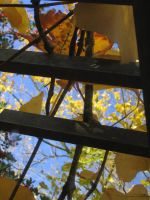 Fall Frames 1 by axcho