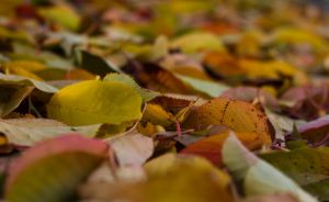 Autumn Leaves by BusterBrownBB