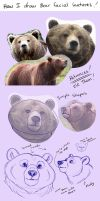 Bear Features Tutorial by Miss-Melis