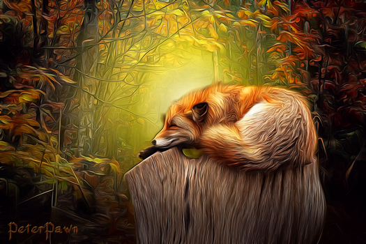 The Fox in the Forest by PeterPawn