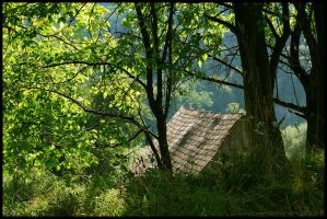 Nature roof by cipriany