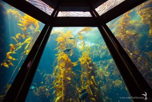 Kelp forest at the Monterey Bay Aquarium 01 by NoirArt