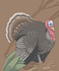 Turkey by Saevus