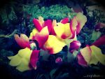 Summer Flower 2012 - 10 by Ingnition