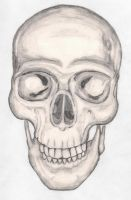 Skull Sketch by JesseAllshouse