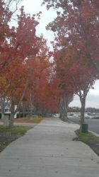 Seasons in LA by musicdrummer01